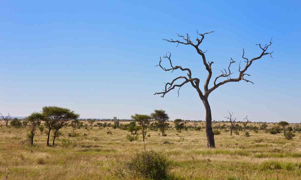 Bush veldt in Mpumalanga. Sheep not shown. (Shutterstock.com)
