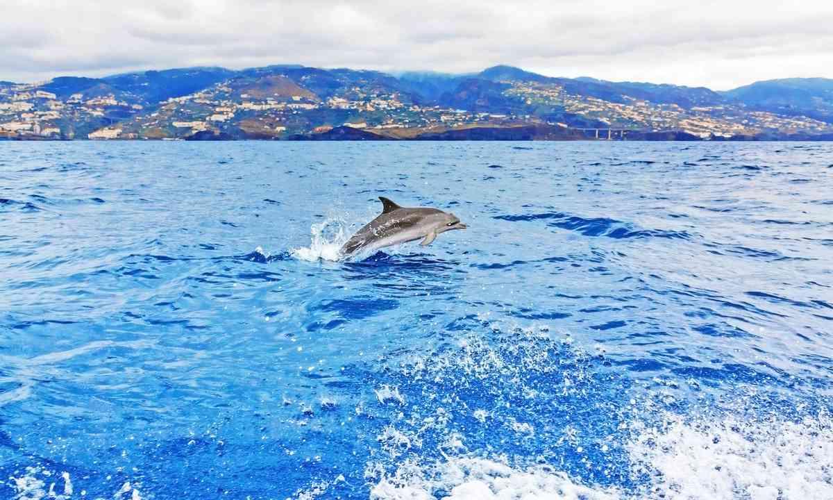Bottlenose dolphin (Shutterstock.com)