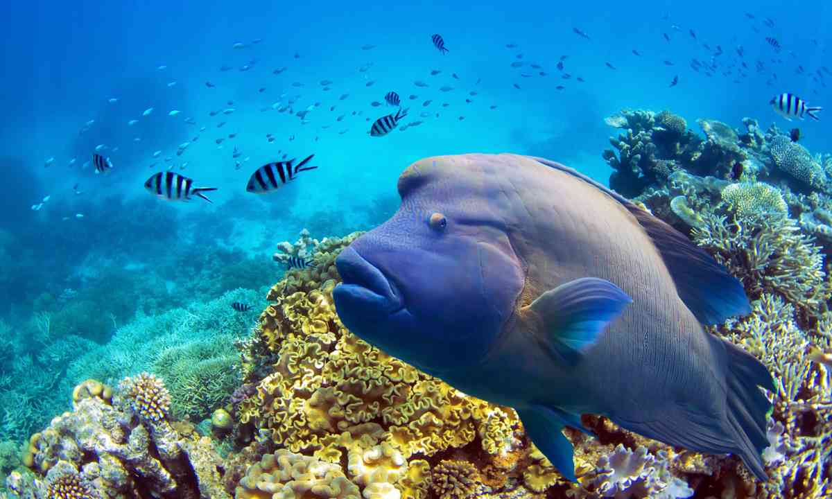 Fish on the Great Barrier Reef (Shutterstock.com)