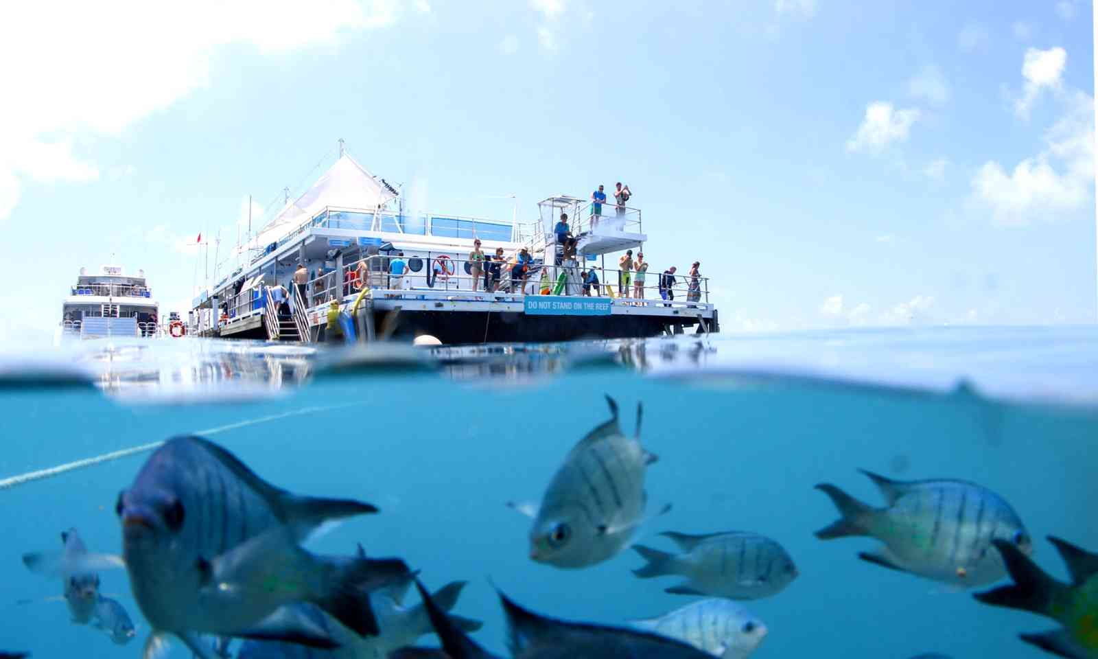 Reef sleep pontoon (Britt Collins)