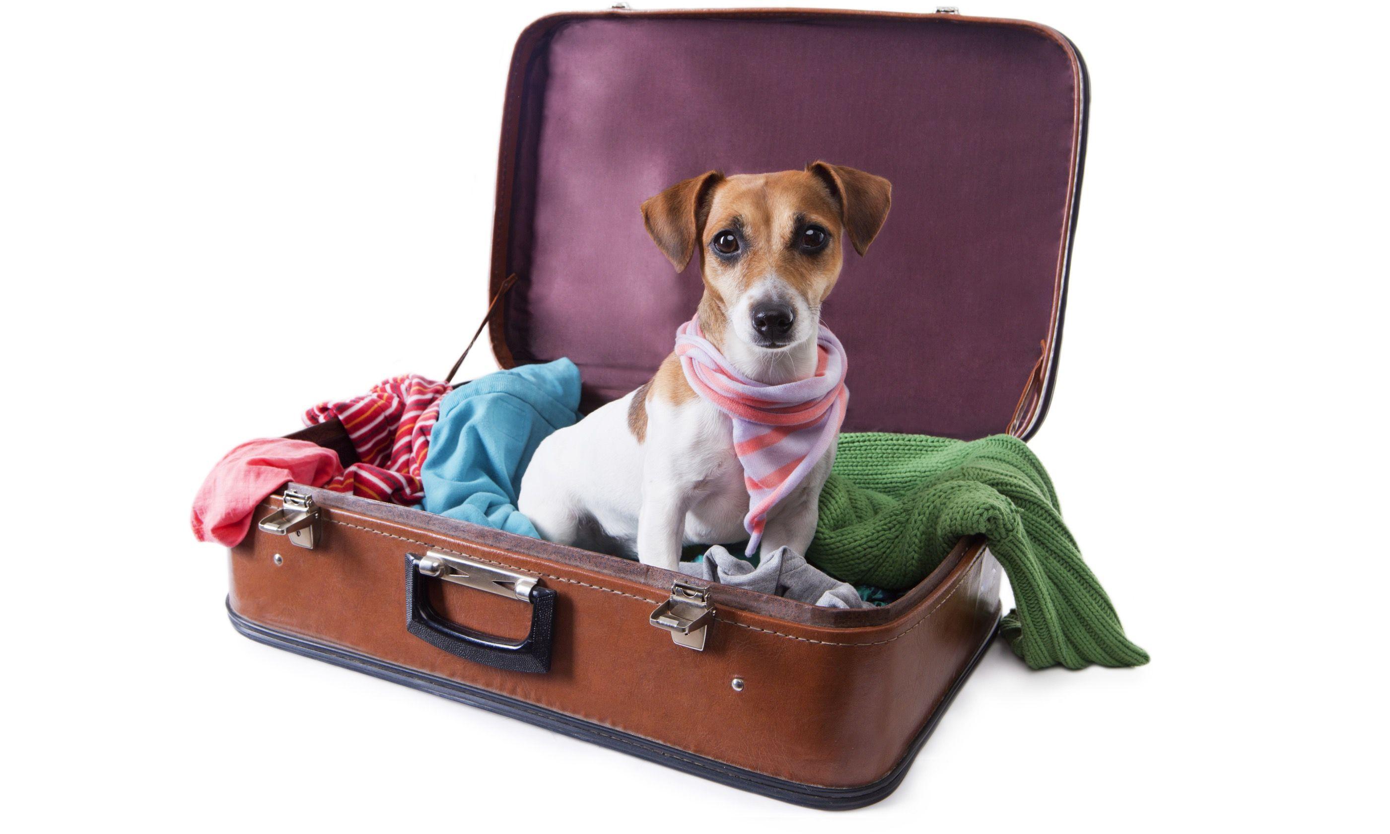 Dog in a suitcase (Shutterstock.com)