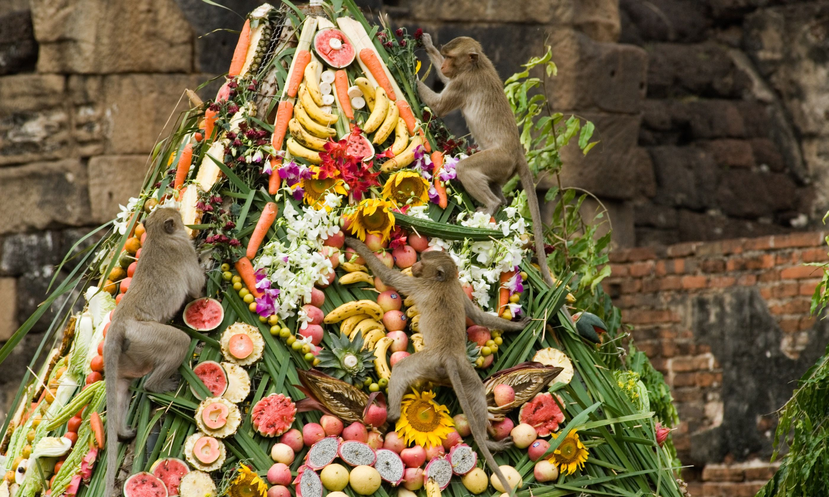 Monkeys clambering on tower of food (Shutterstock.com)
