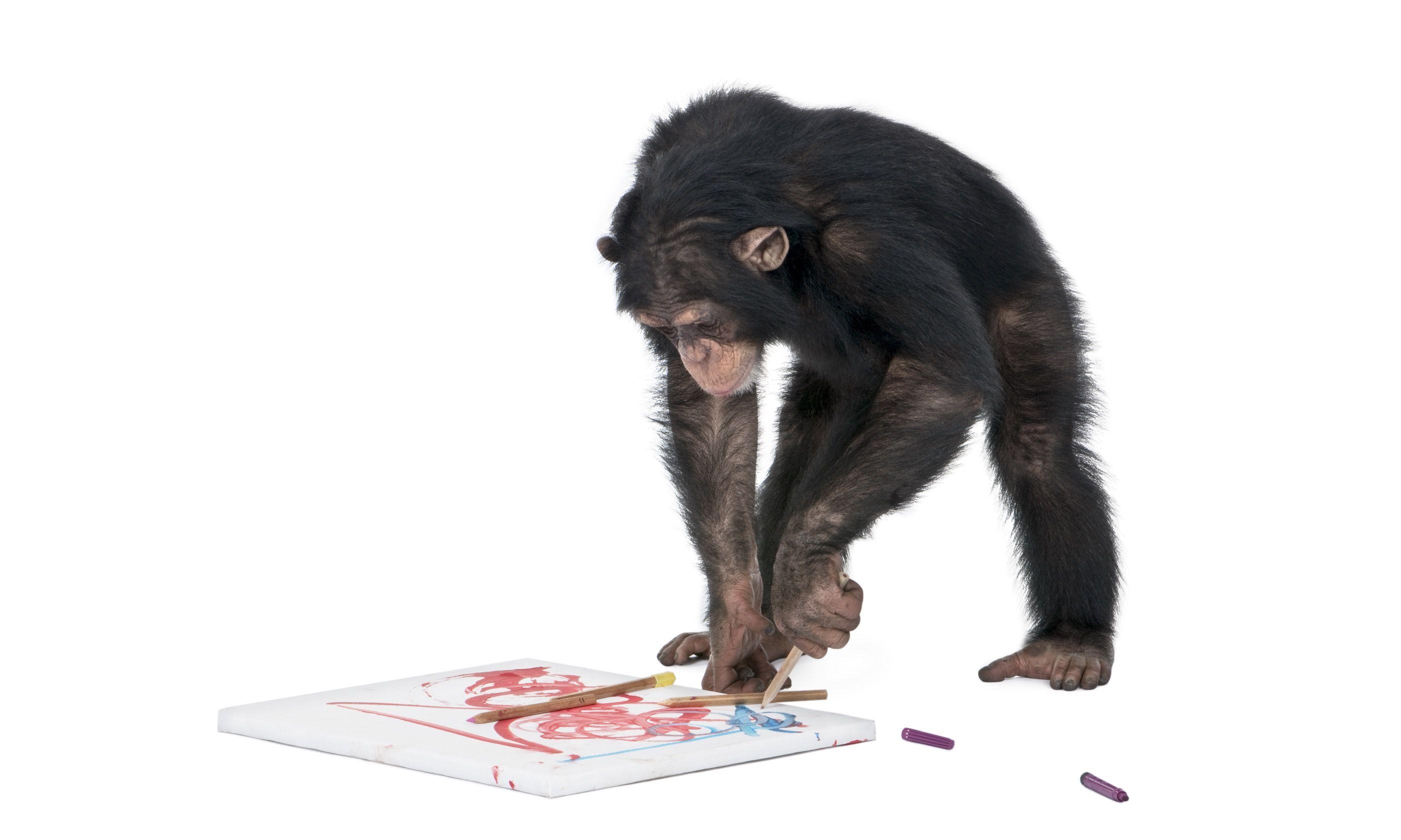 Chimp painting (Dreamstime)