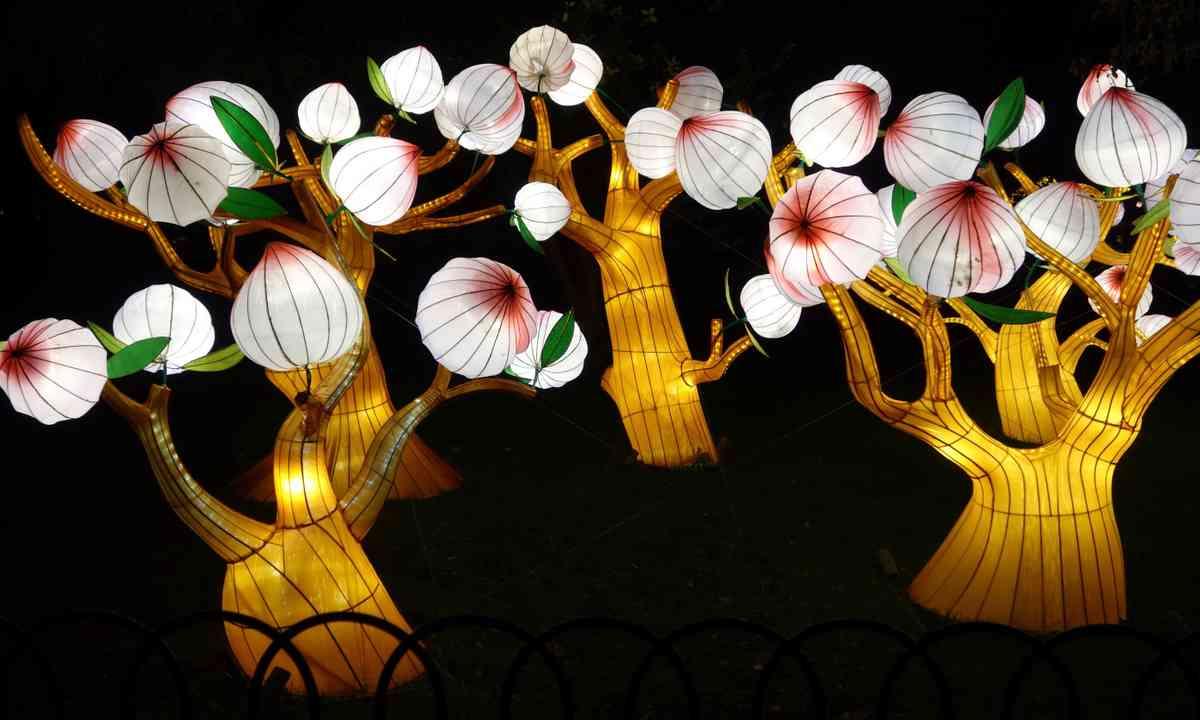 Magnolia Trees (Peter Moore)