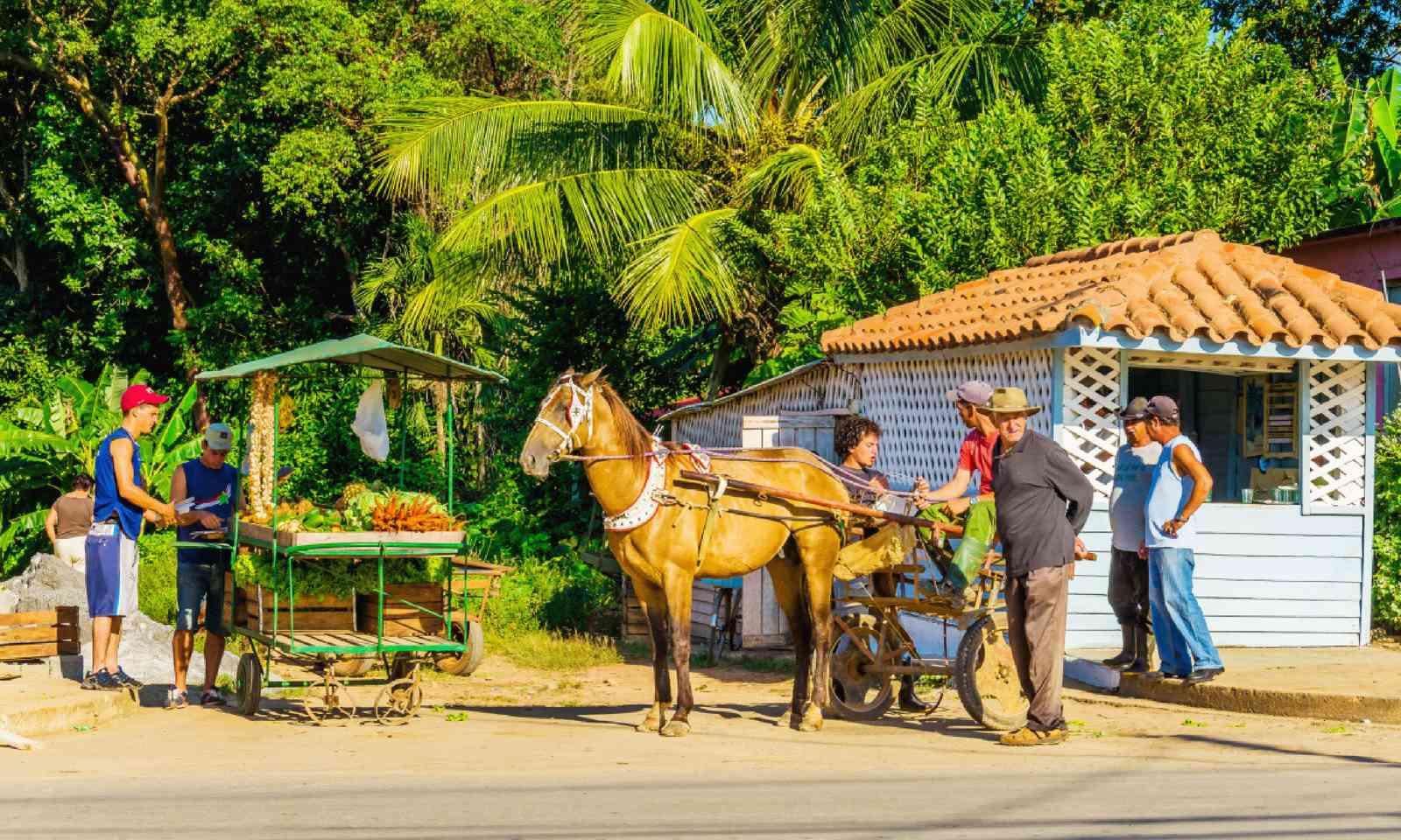 Fruit stall in Vinales (Shutterstock)