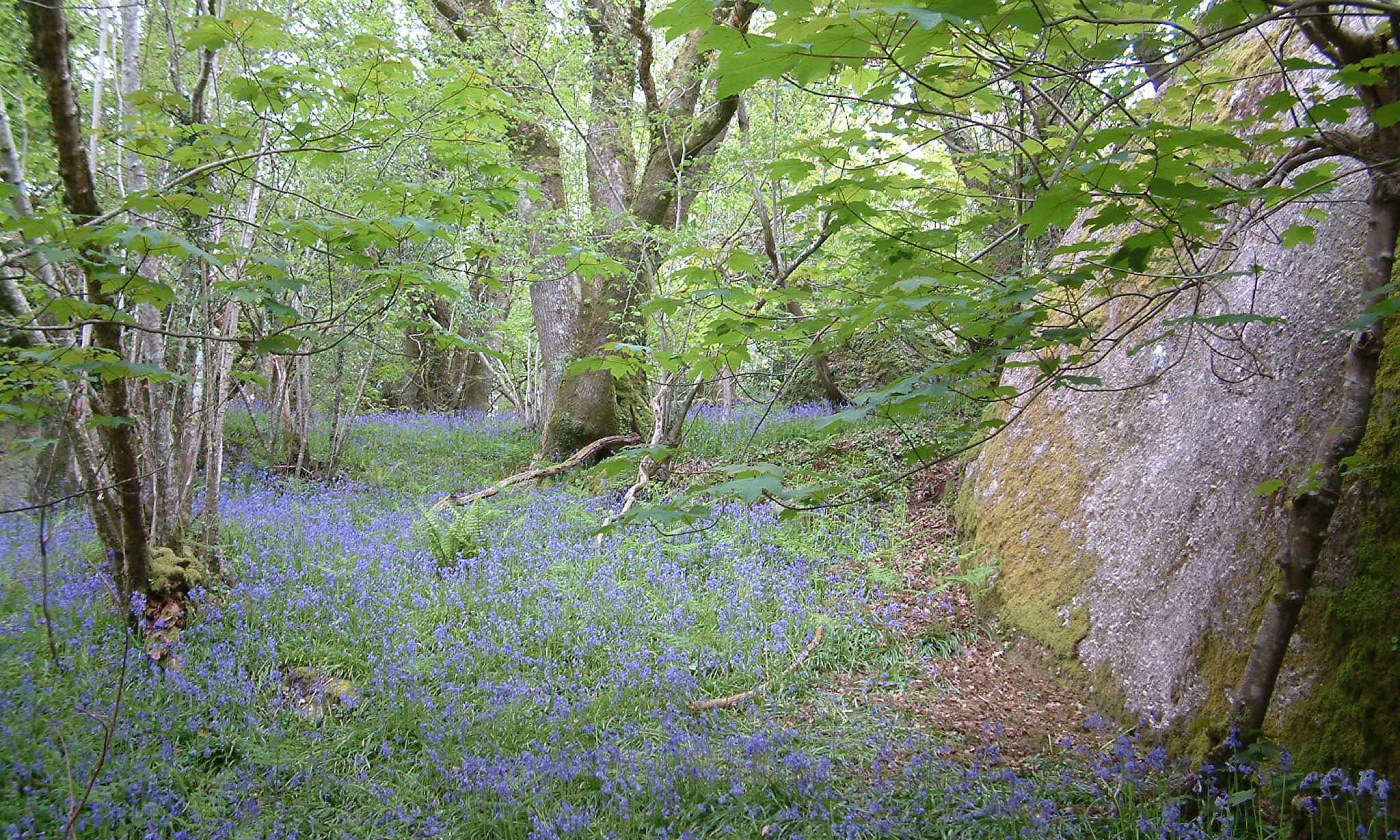Chapter Woods (Woodlands Trust)