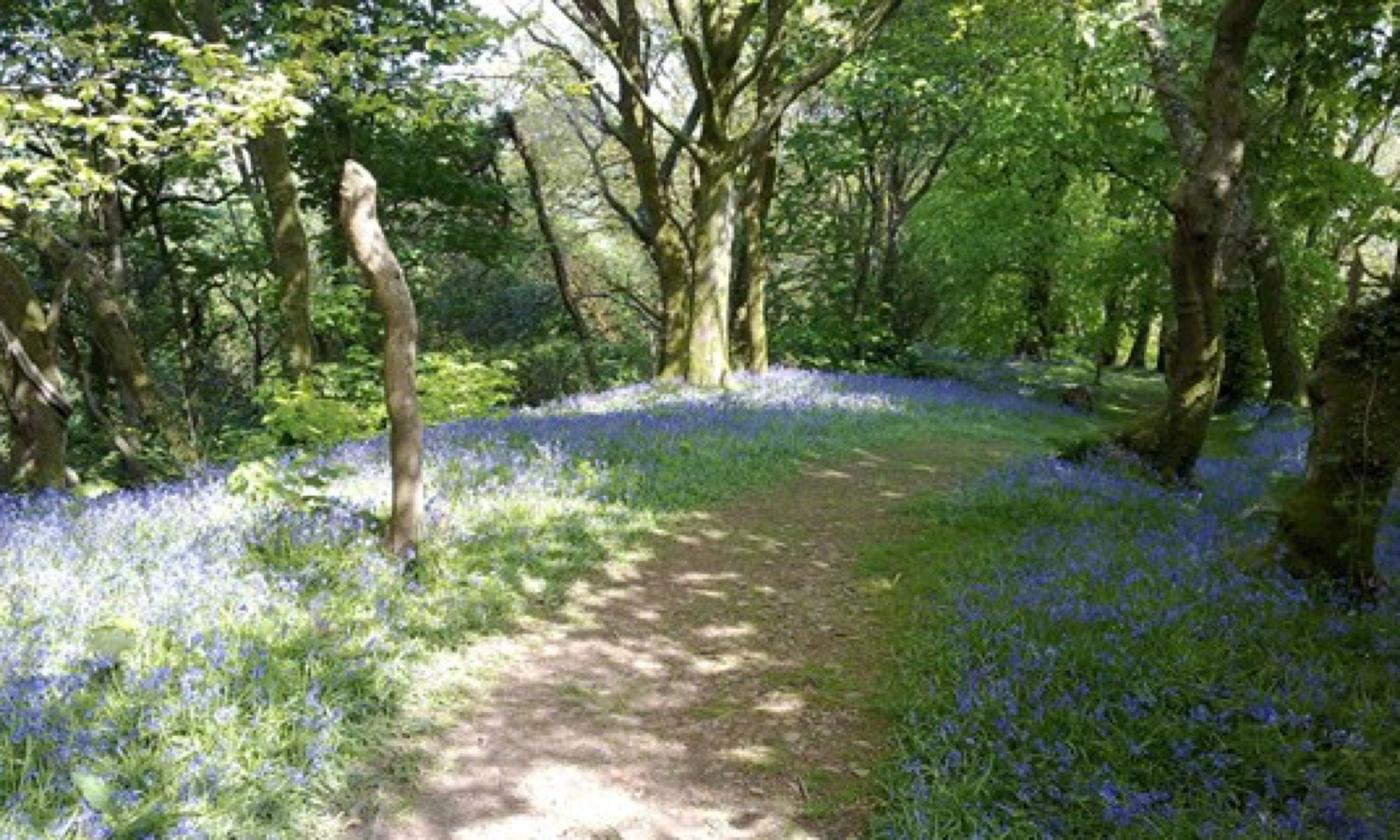 Green Castle Wood (Woodlands Trust)