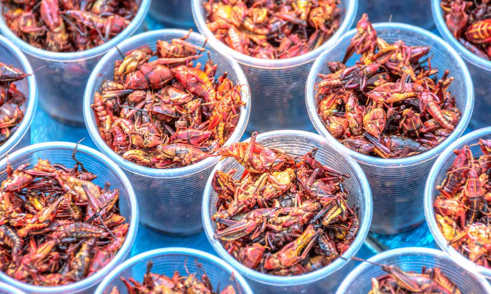 Grasshoppers in Mexico (Shutterstock)