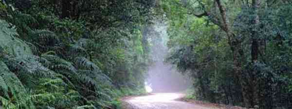 Get lost in the woods: Knysna forests (South Africa Tourism)