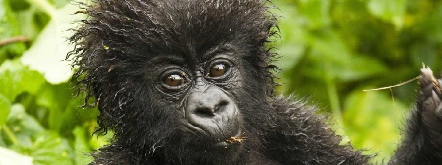 10 of the best places to see gorillas