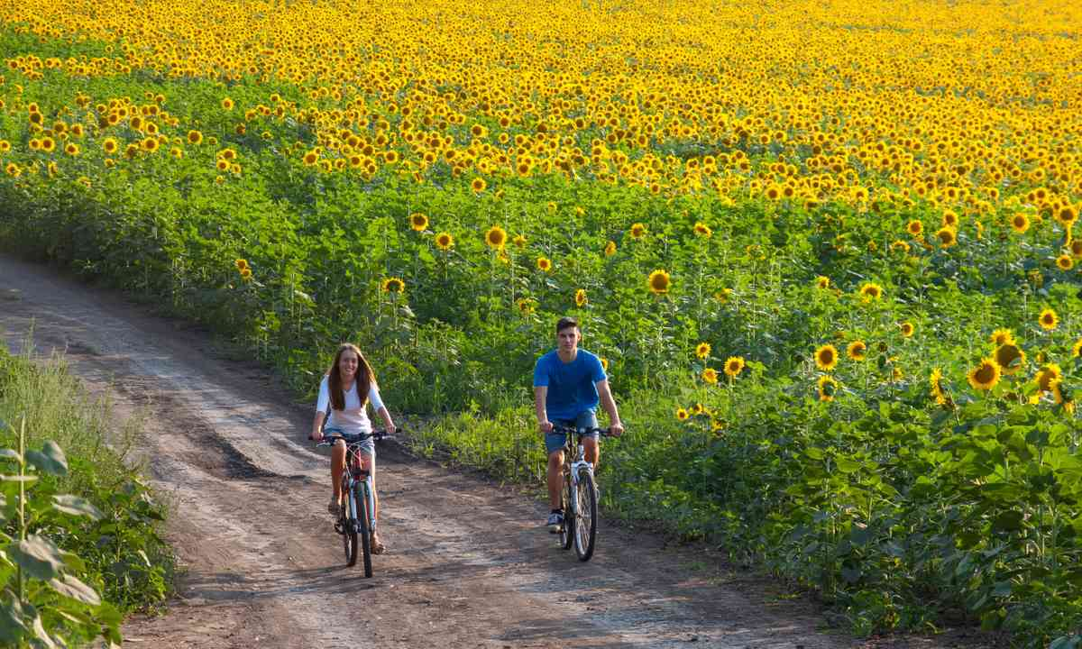 Cycling through sunflowers in Tuscany (Shutterstock.com)