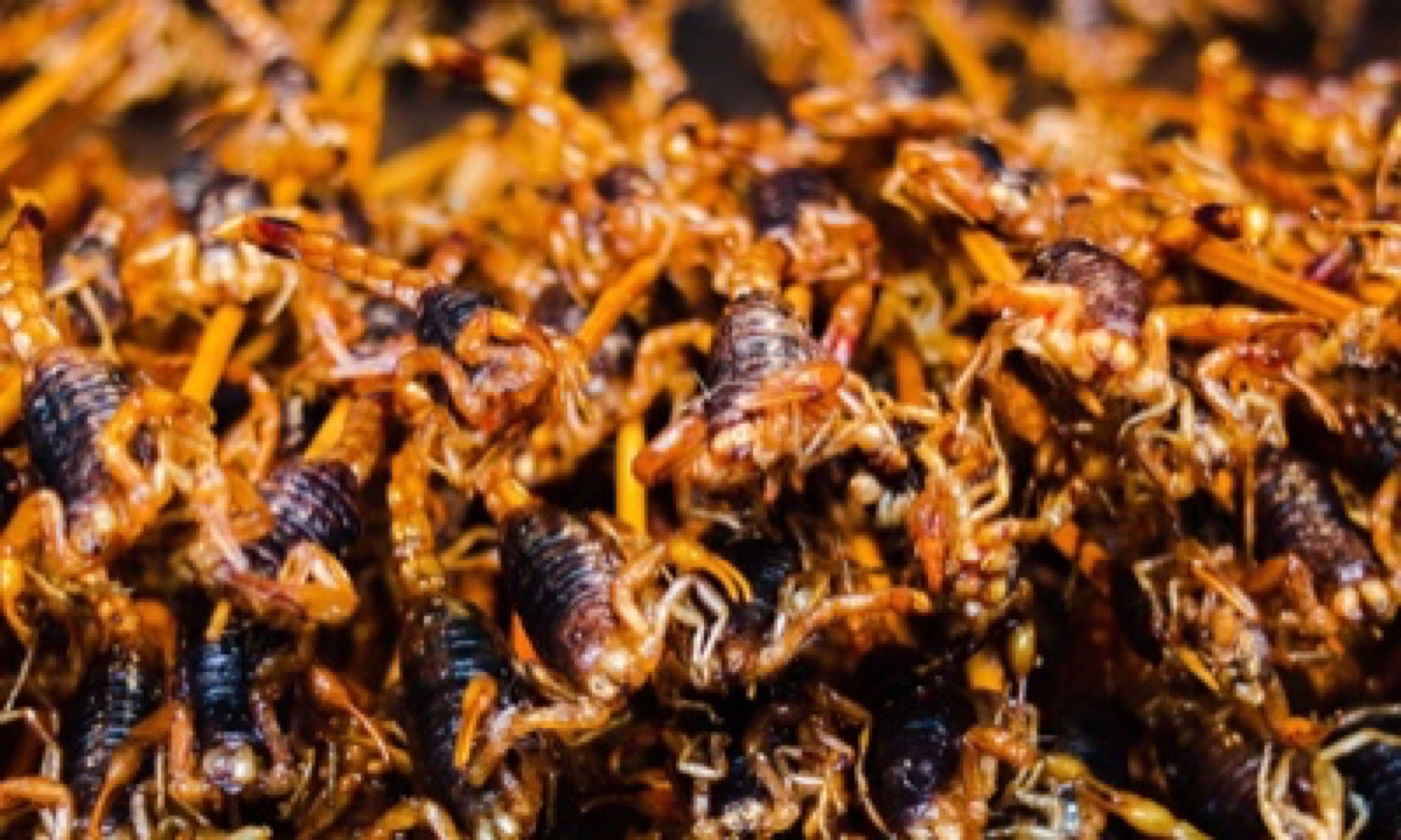 Deep fried scorpions (Matthew Woodward)