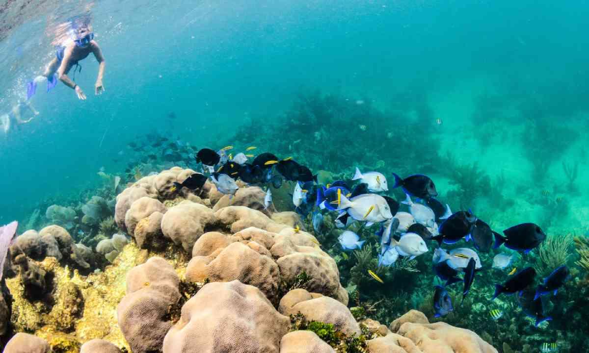 Snorkelling in Belize (Shutterstock)