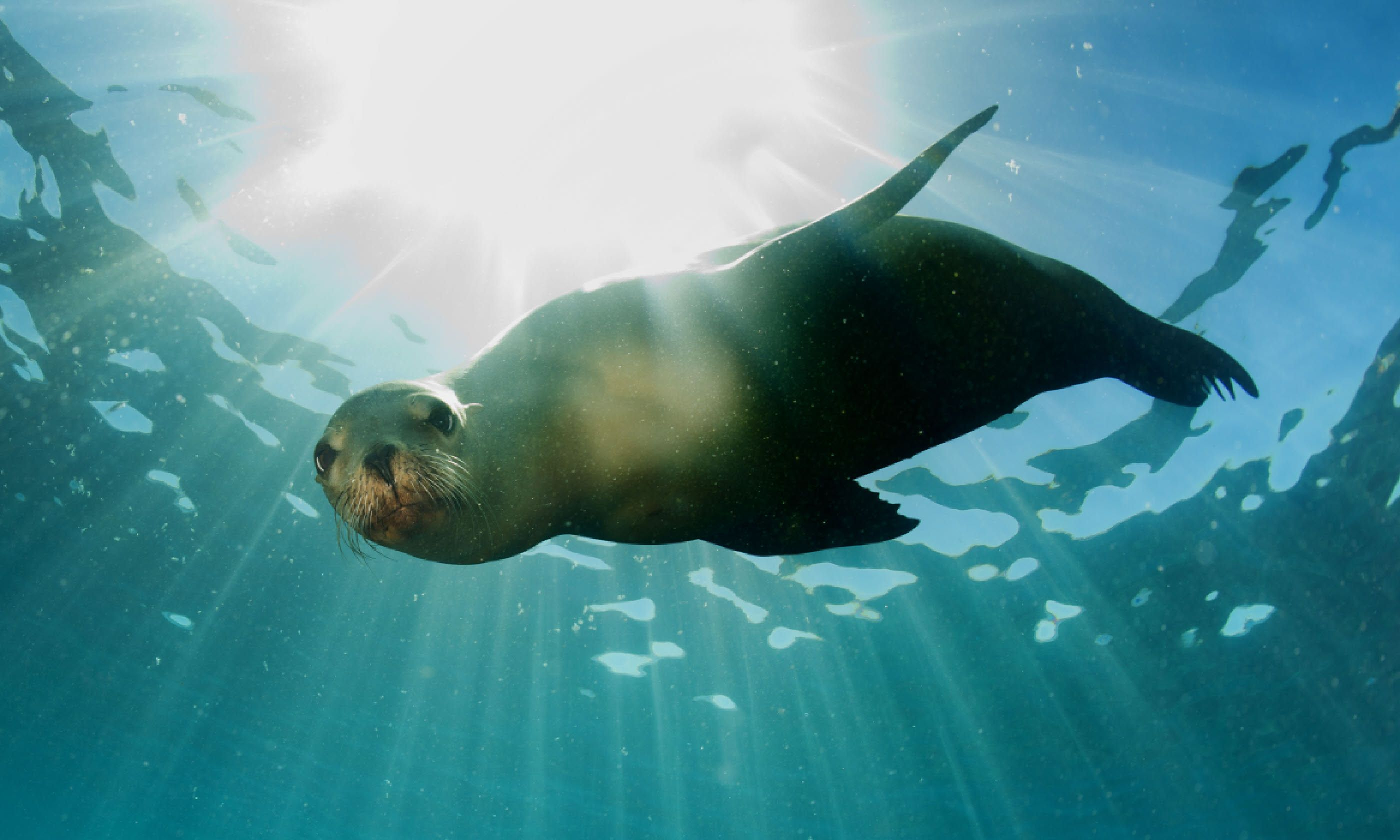Sea lion (Shutterstock)