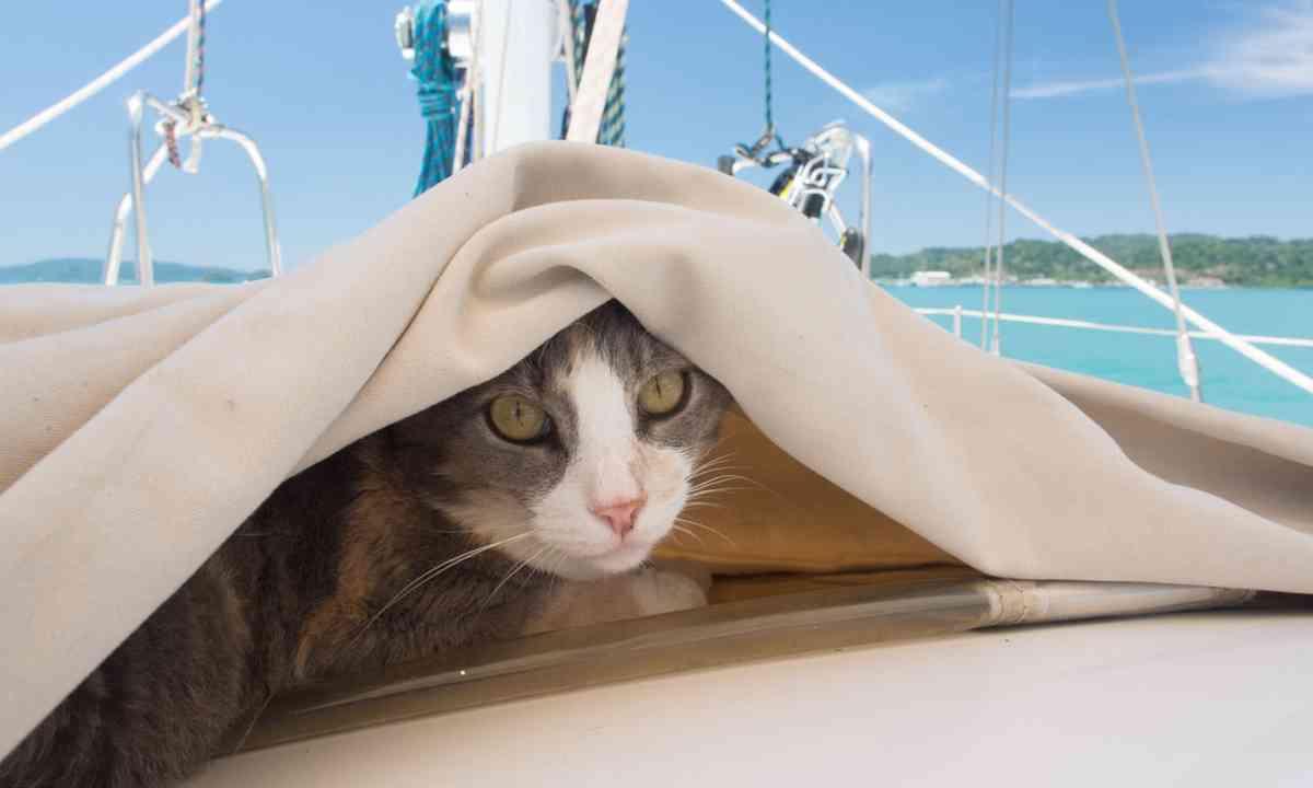 Millie under cover (Liz Cleere)