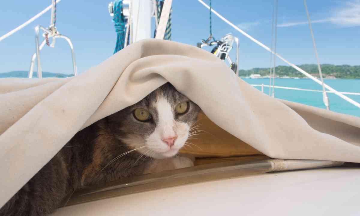 Millie under cover (Liz Cleere)
