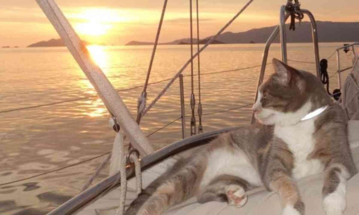 Millie watches the sun set