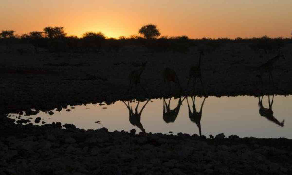 Waterhole silhouette (Edwina Cagol)
