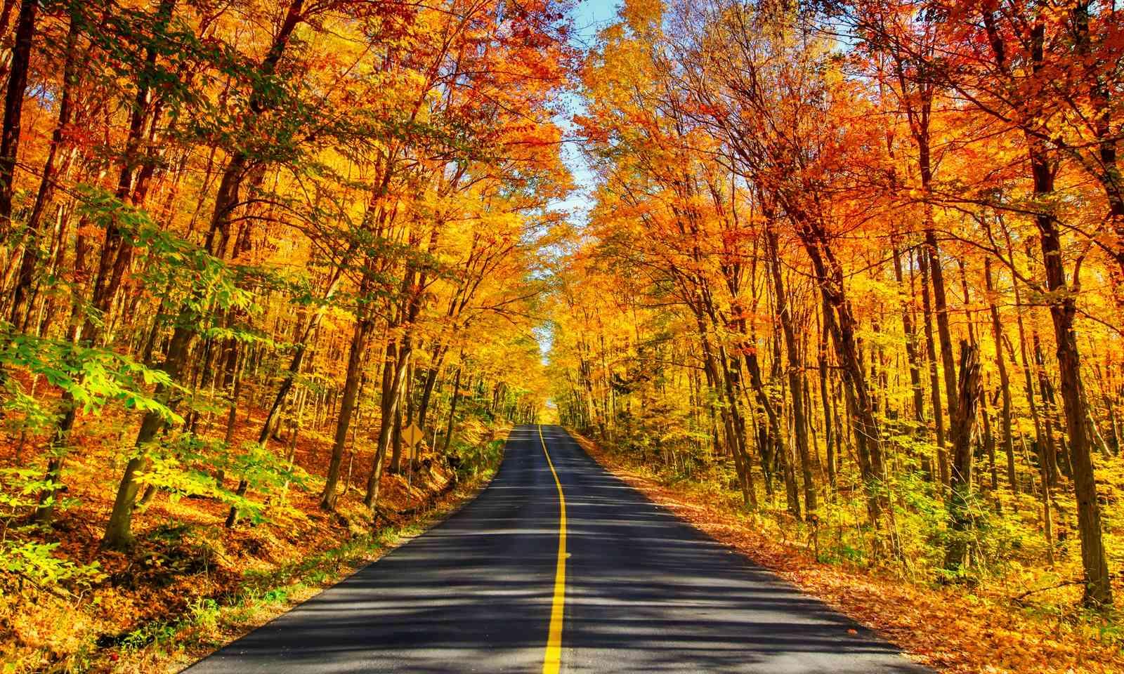 Autumn leaves in Muskoka (Shutterstock.com)