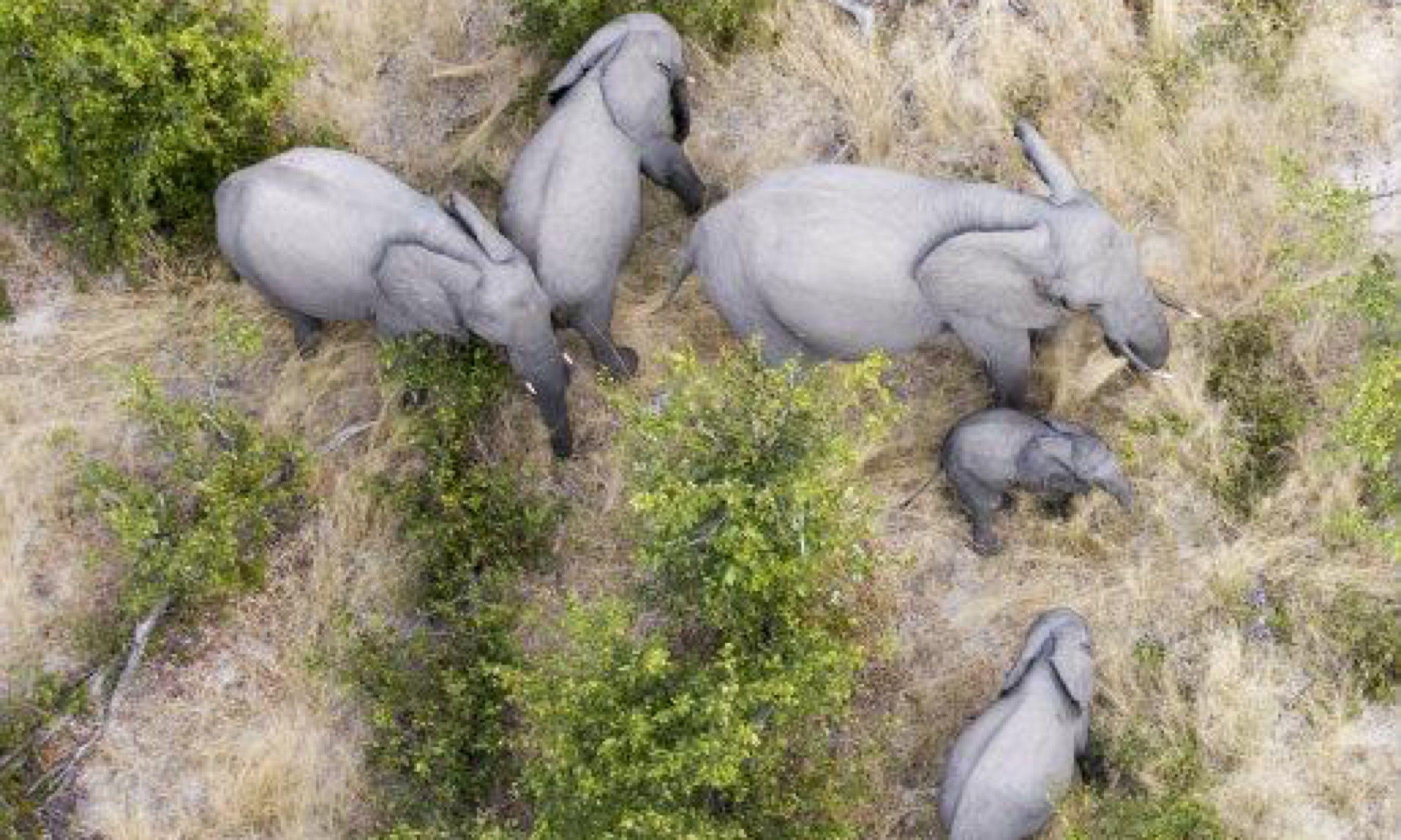 Elephants in the delta (Edwina Cagol)