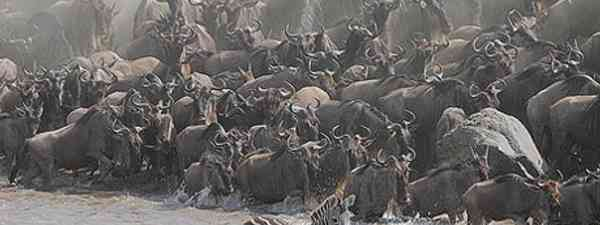 The Great Migration: one of the greatest spectacles on earth (Steve Garvie)