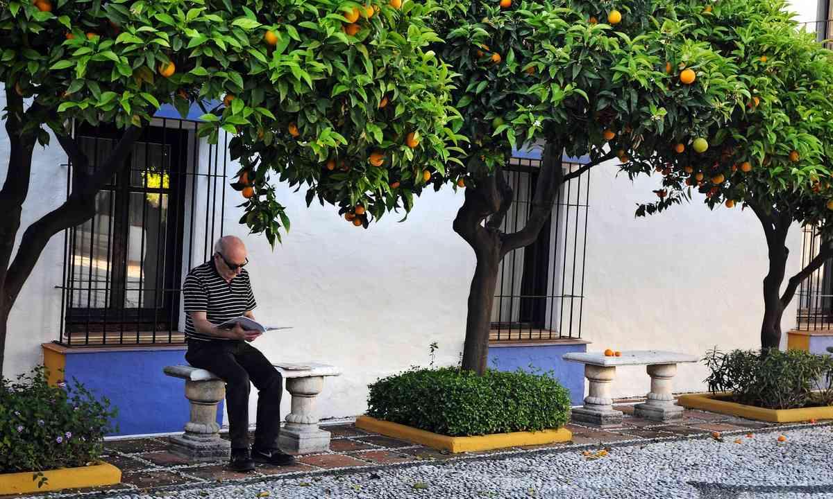 Man sitting under orange tree in Seville (Dreamstime)