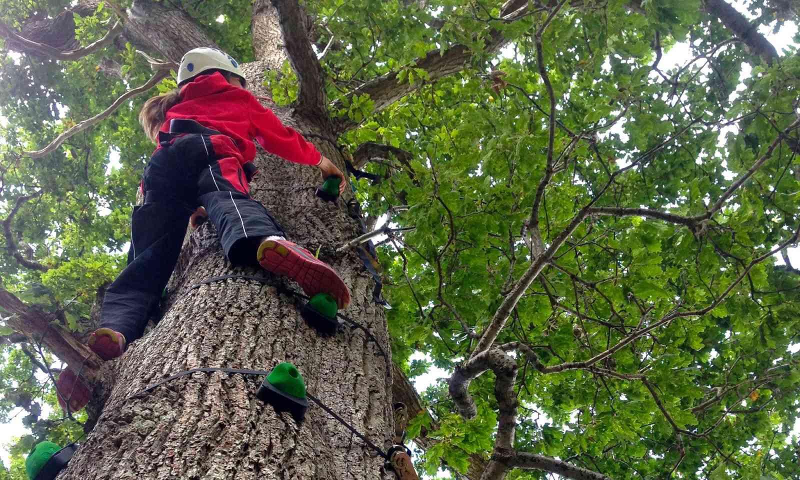 Tree climbing (National Trust)
