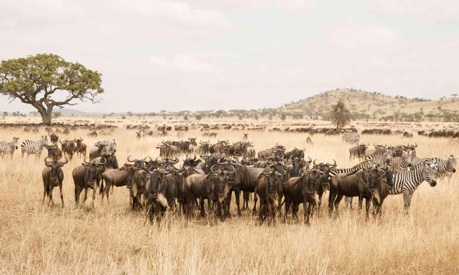 Seronera, Serengeti National Park, Tanzania (Shutterstock)