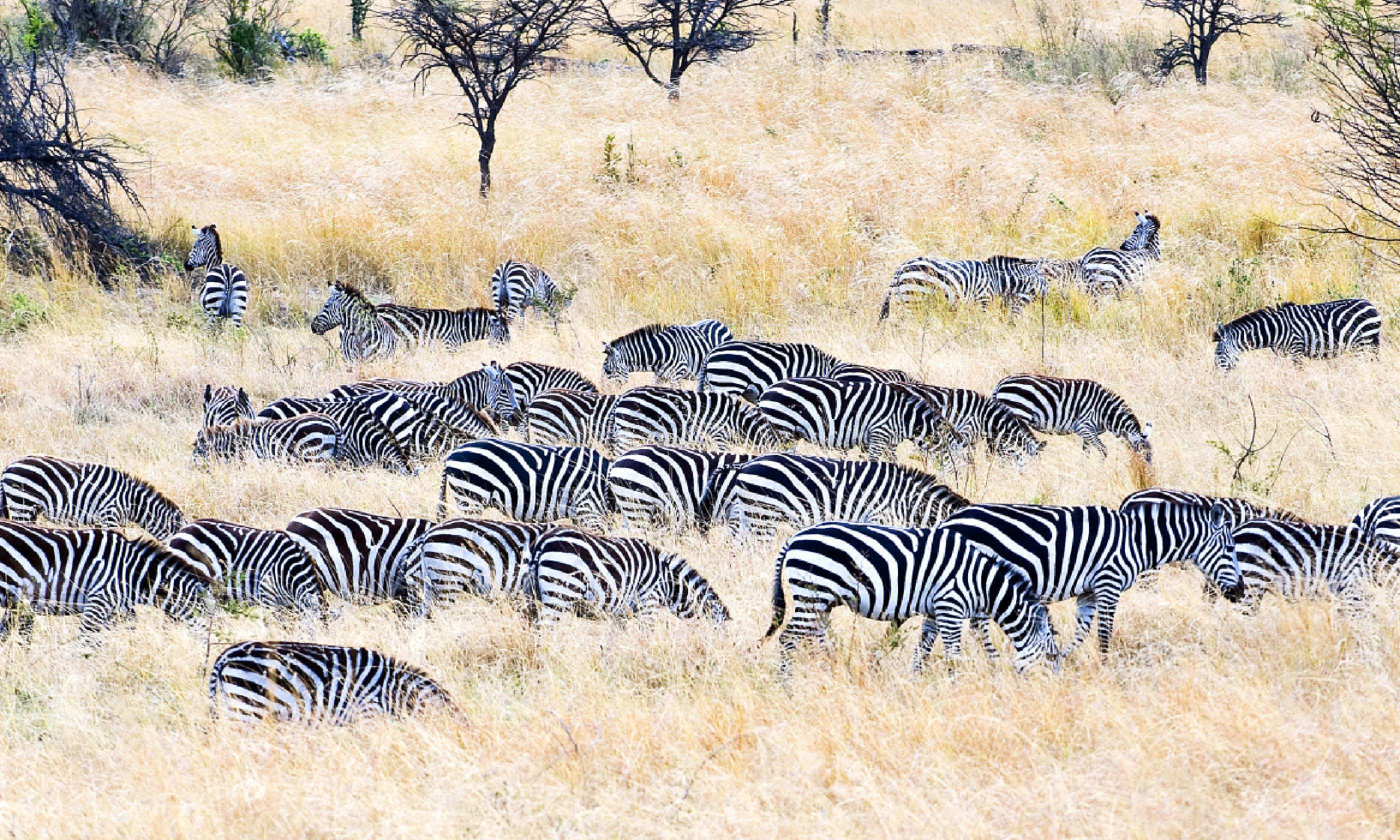 Serengeti National Park, Seronera area (Shutterstock)