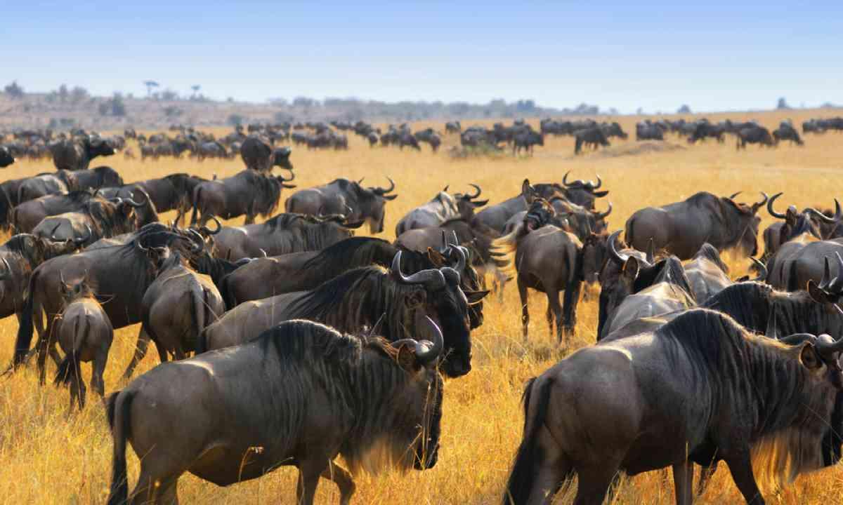 Masai Mara, Kenya (Shutterstock)