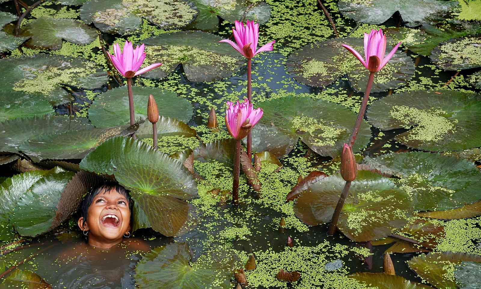Young Indian boy swimming amongst lily pads (Dreamstime)