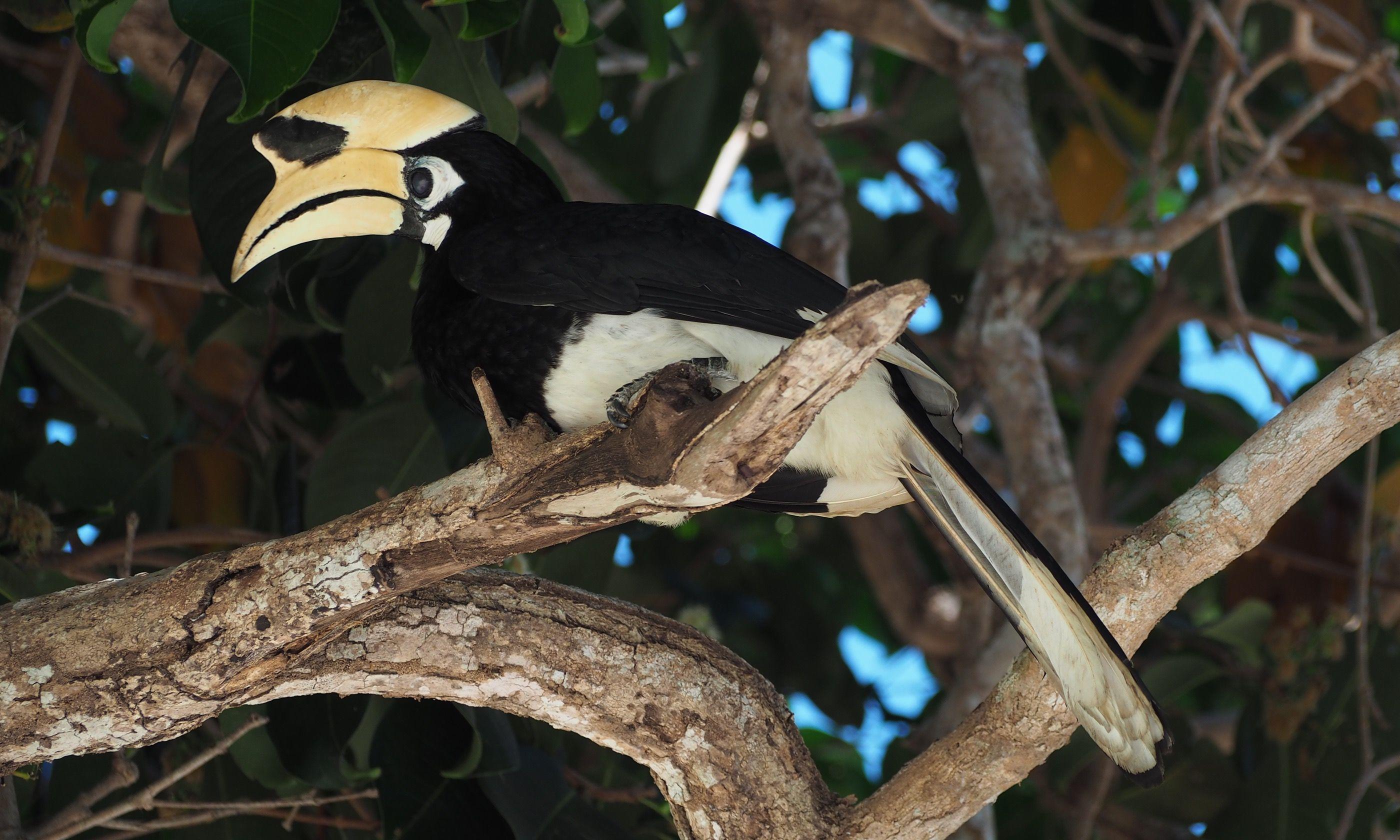 Hornbill (Jamie Furlong)