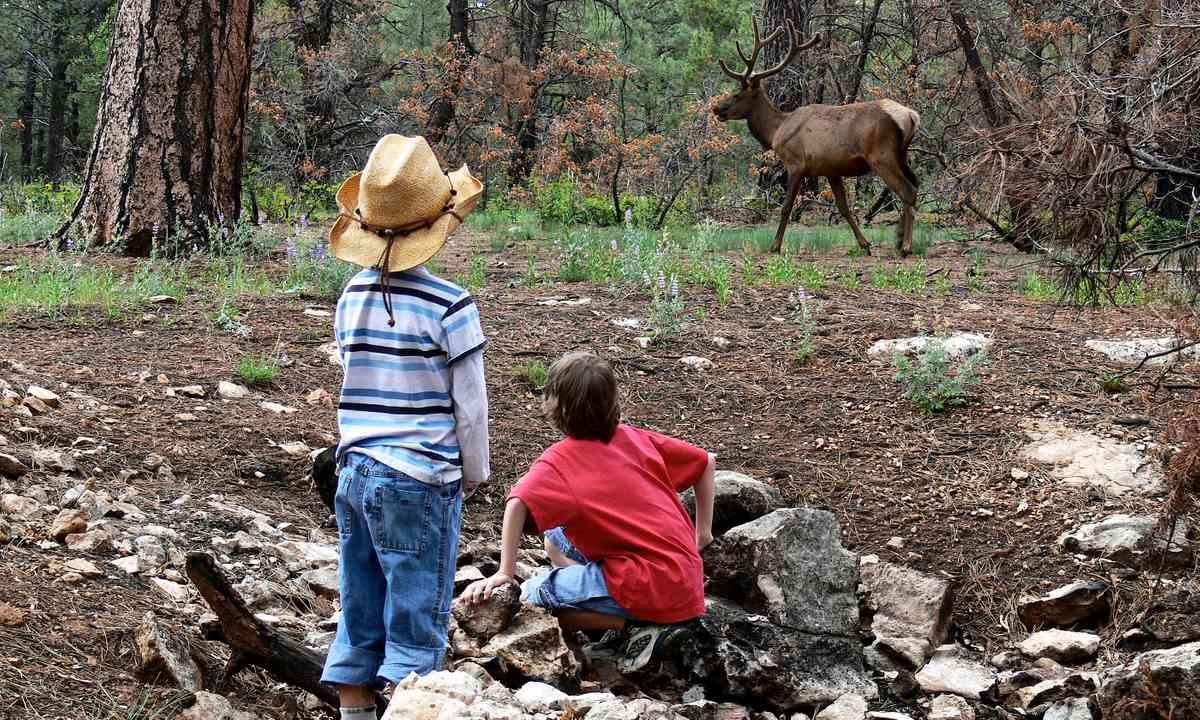 Elk watching (Melanie Gow)