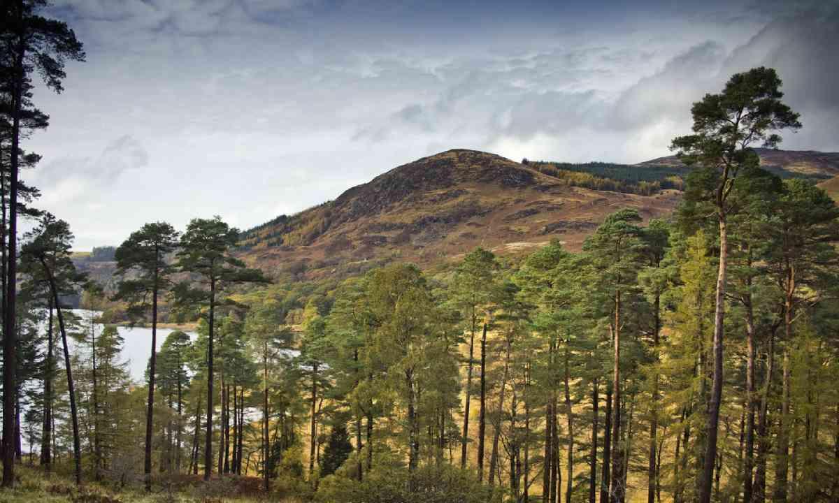 Galloway Forest Park, Dumfries and Galloway (Shutterstock)
