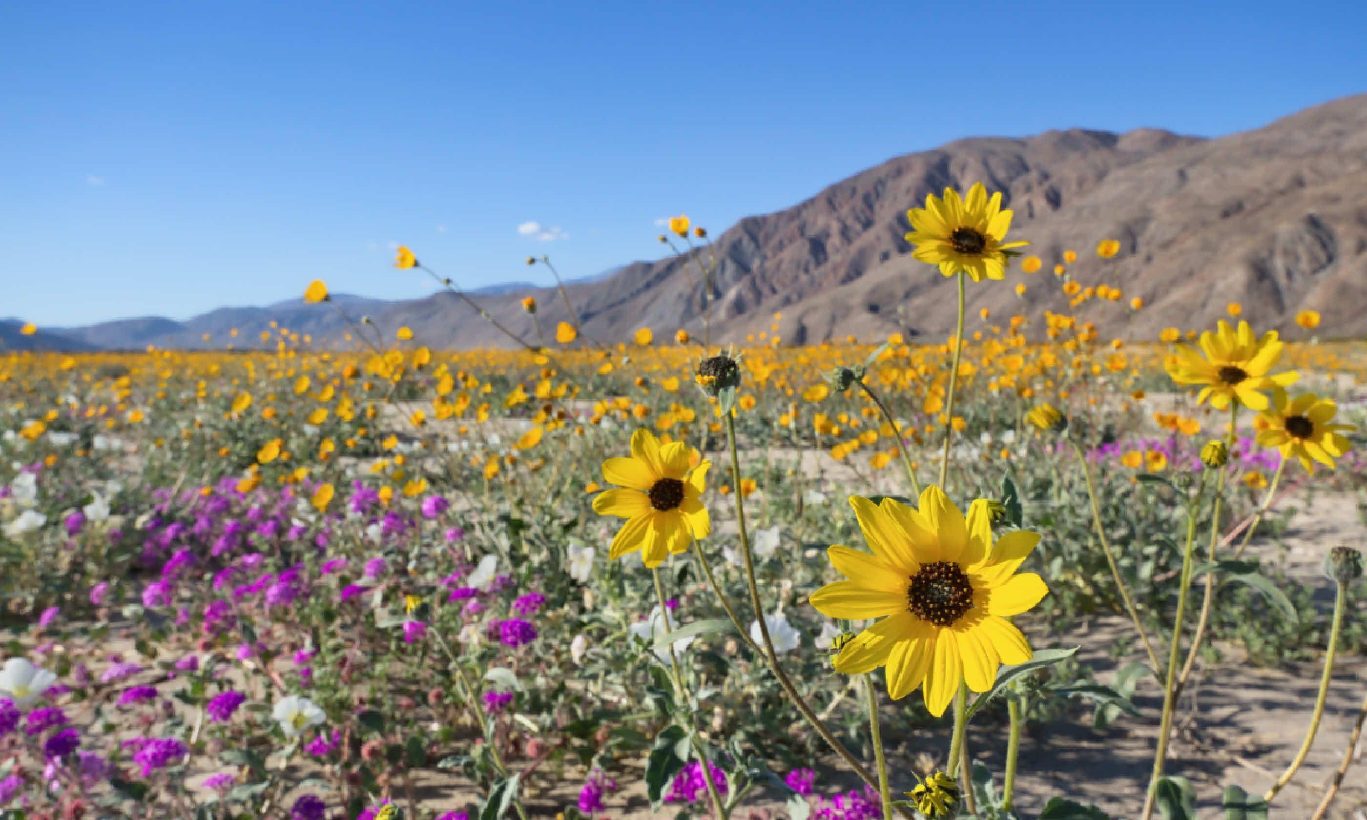 Borrego Desert State Park, California (Shutterstock)