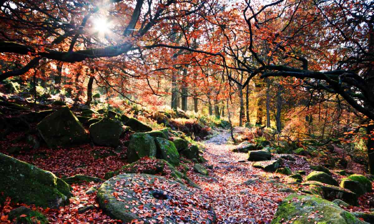 Padley Gorge in its autumn glory (Shutterstock)