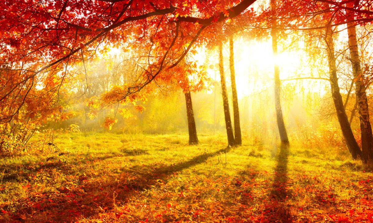 8 autumnal adventures