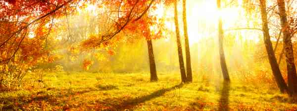 Autumn Trees and Leaves (Shutterstock: see credit below)
