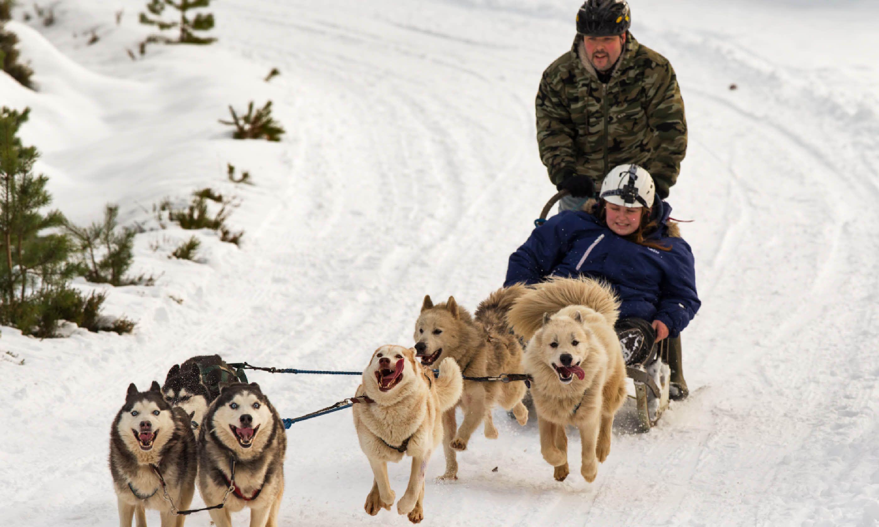 Huskies in the Cairngorms (Shutterstock)