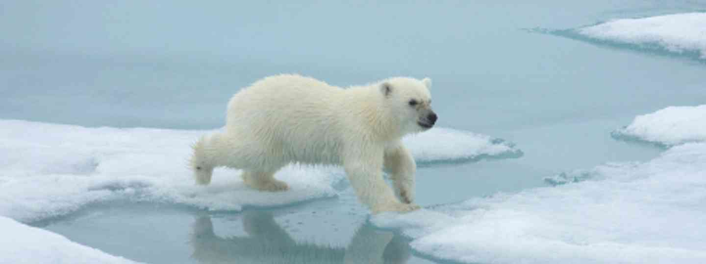 """Aren't polar bears from Poland?"" (polar cruises)"