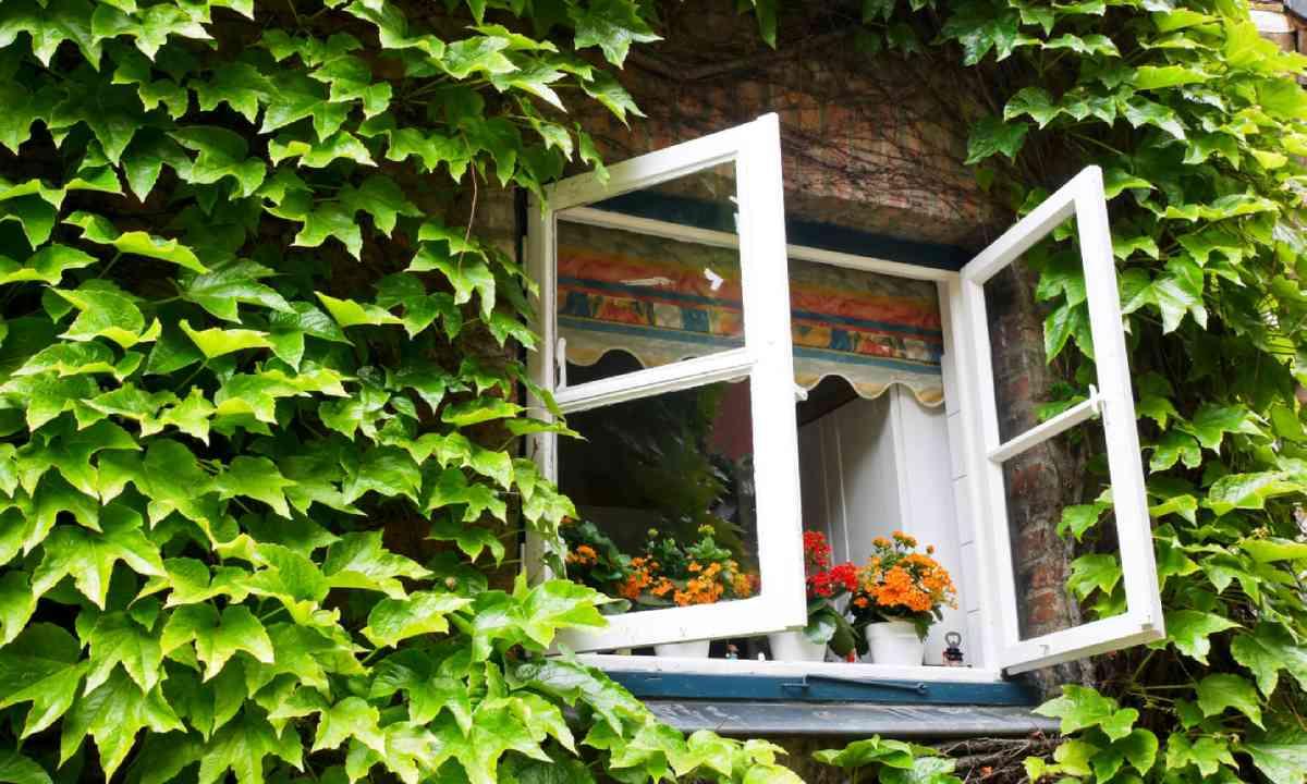 Open window (Shutterstock)