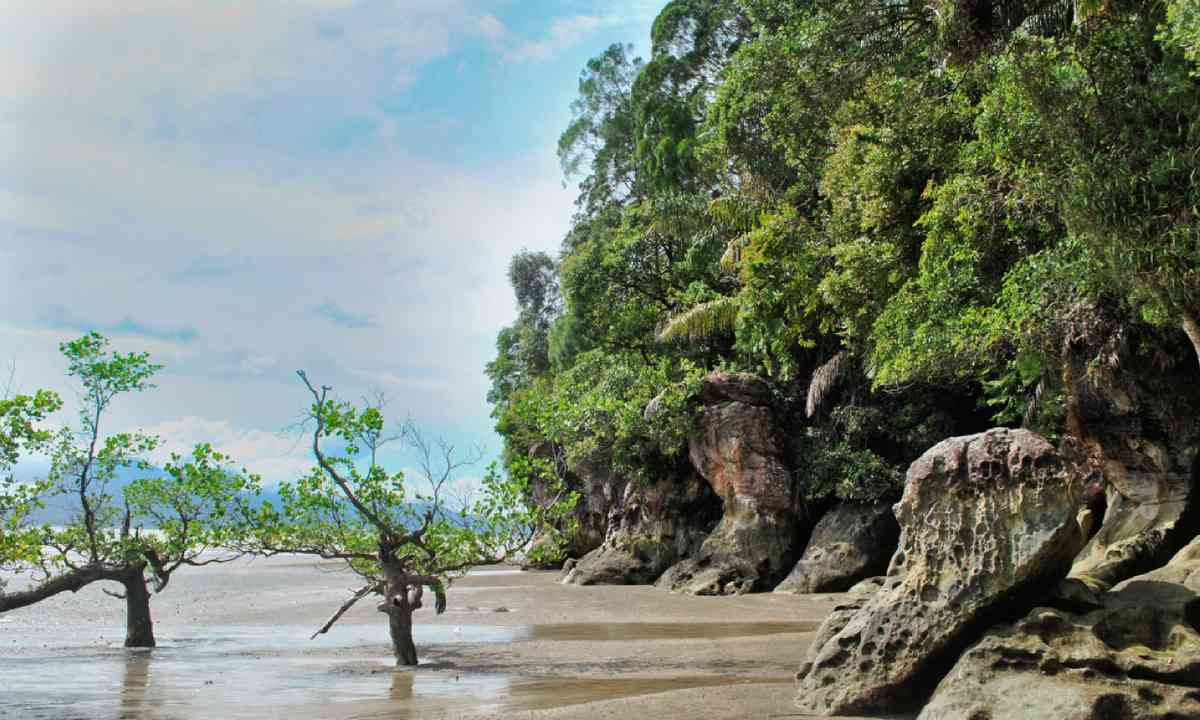 Mangroves, Malaysia (Shutterstock)