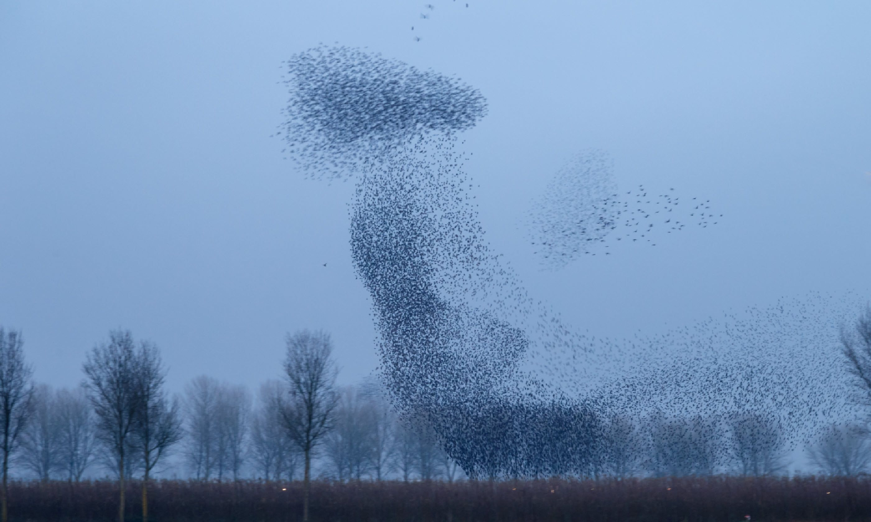 Flock of starlings (Shutterstock)