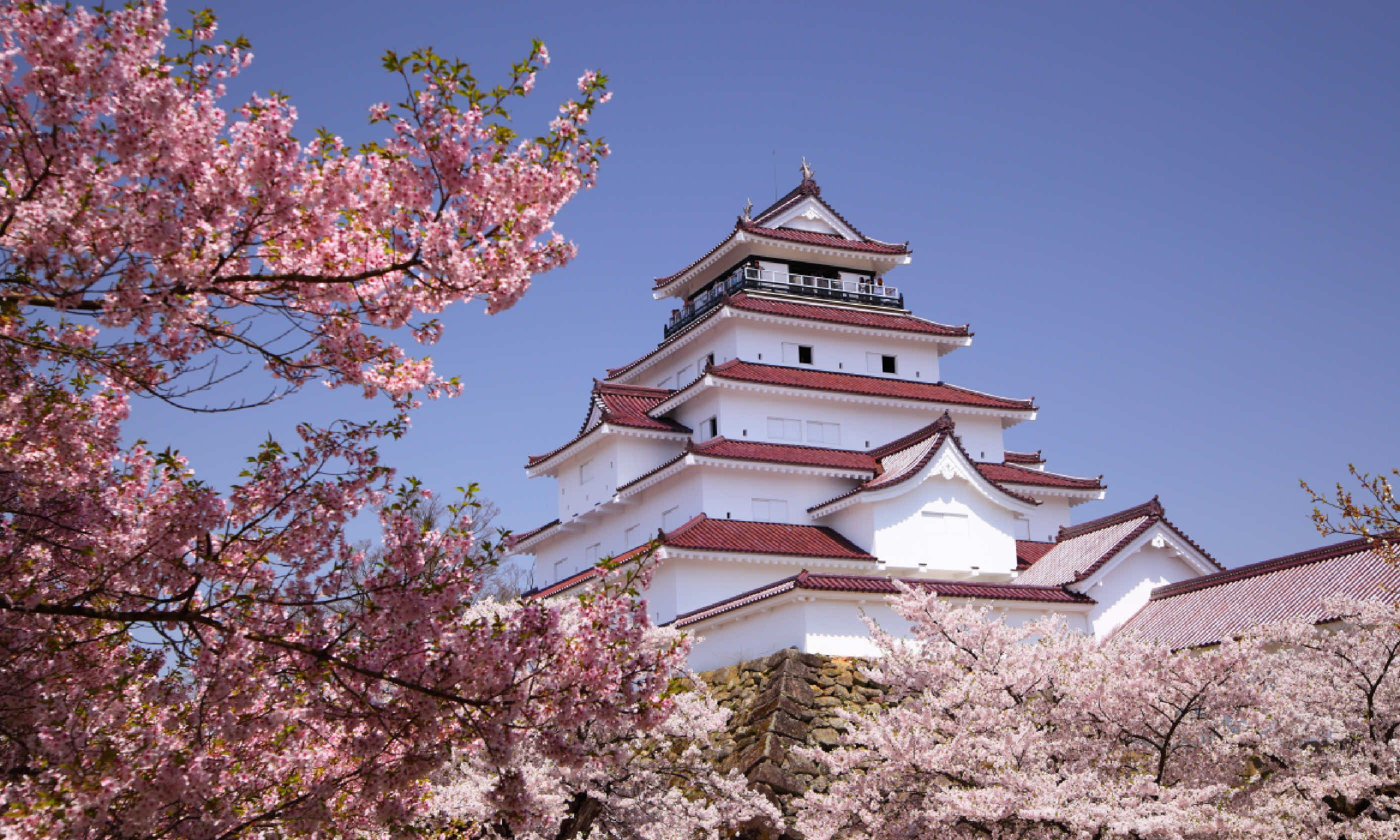 Cherry blossom in Fukushima, Japan (Shutterstock)