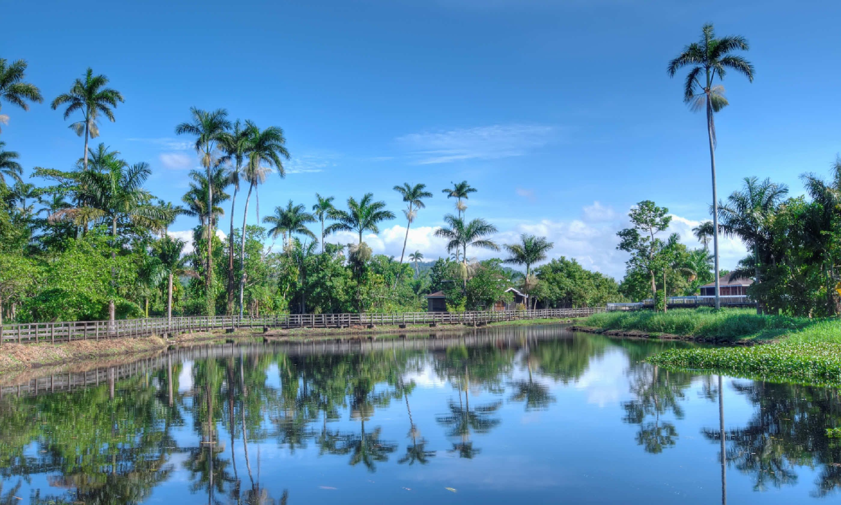 Jamaican landscape with lake and palms (Shutterstock)