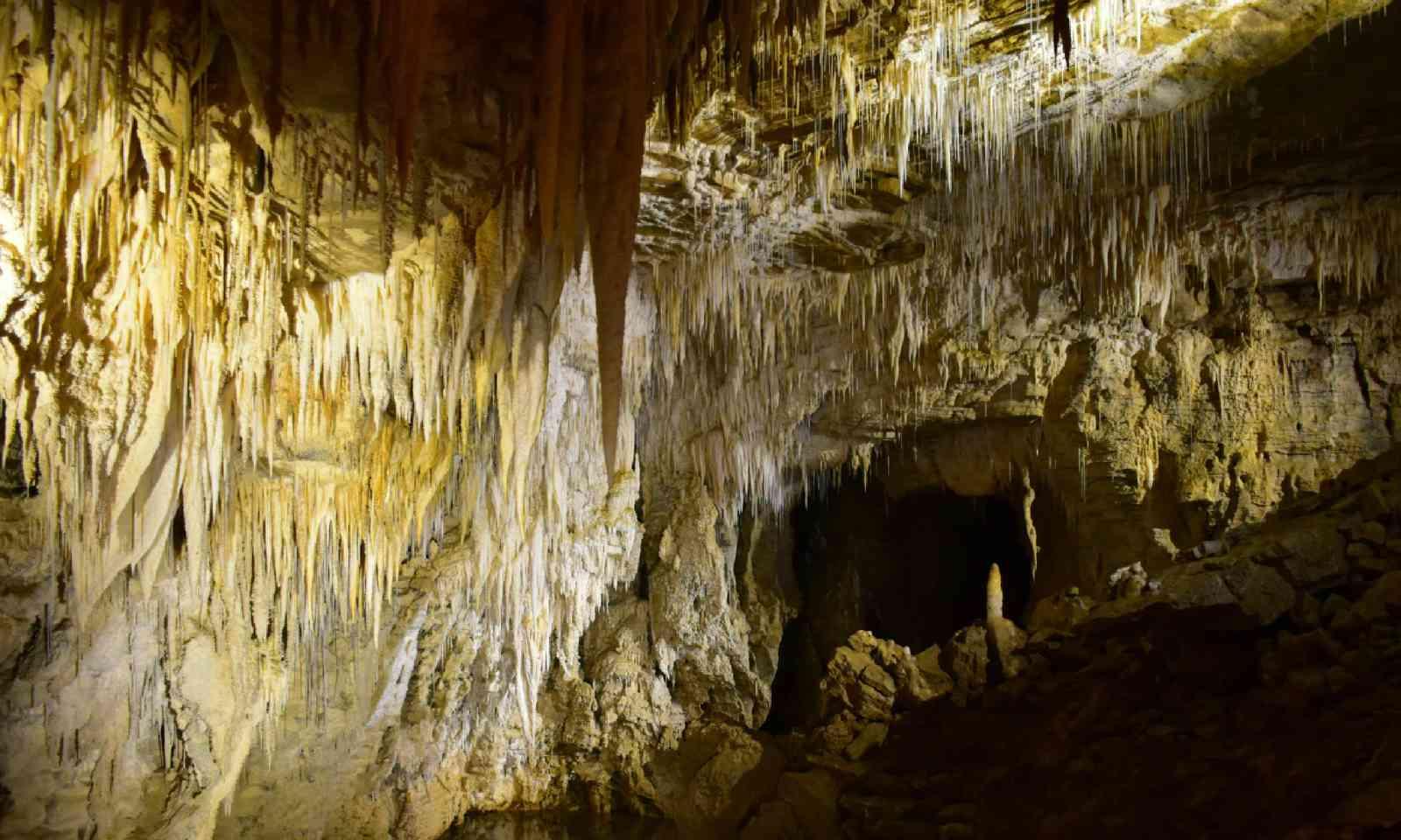 Waitomo caves (Shutterstock)
