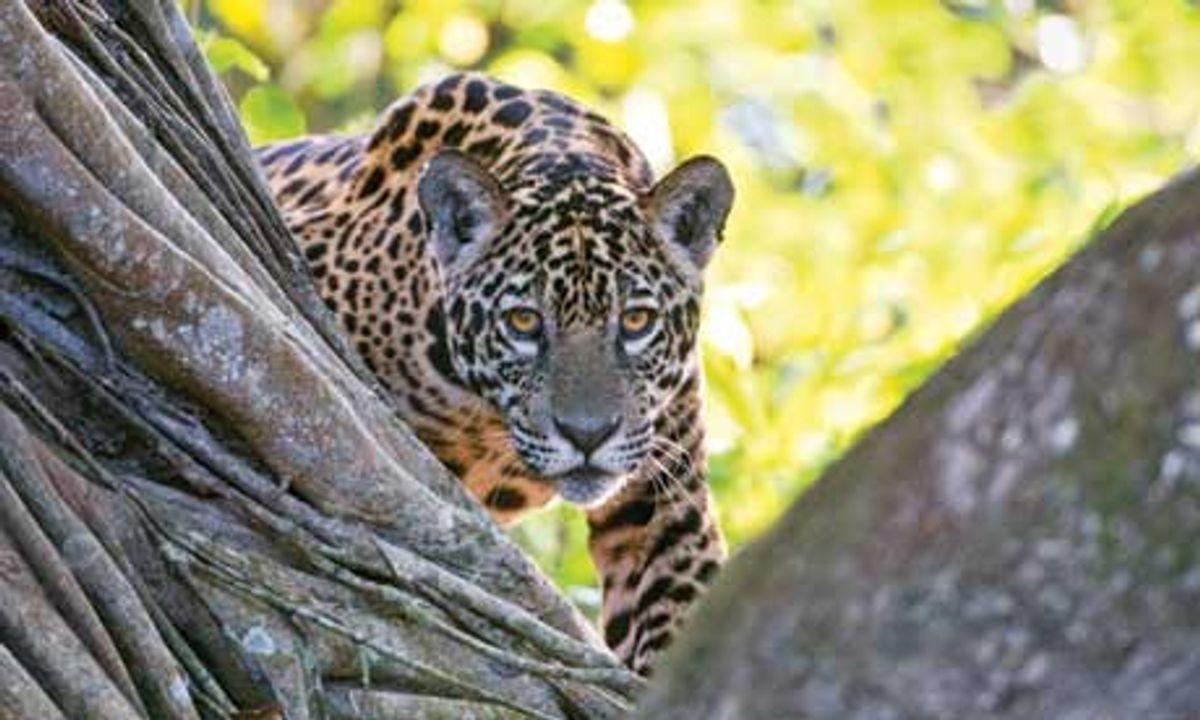 Mark Carwardine's 5 ultimate wildlife experiences