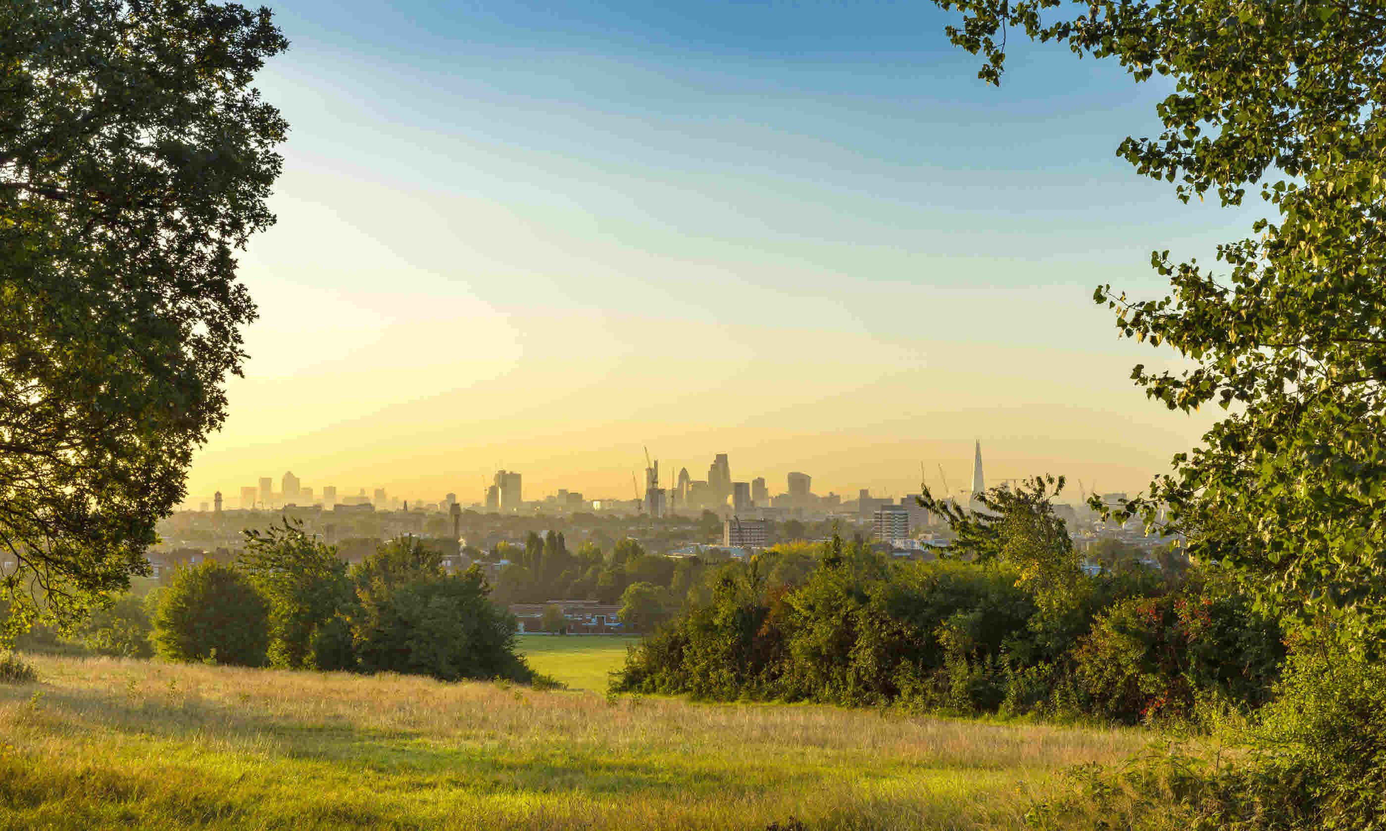 Early morning mist on Hampstead Heath (Shutterstock)