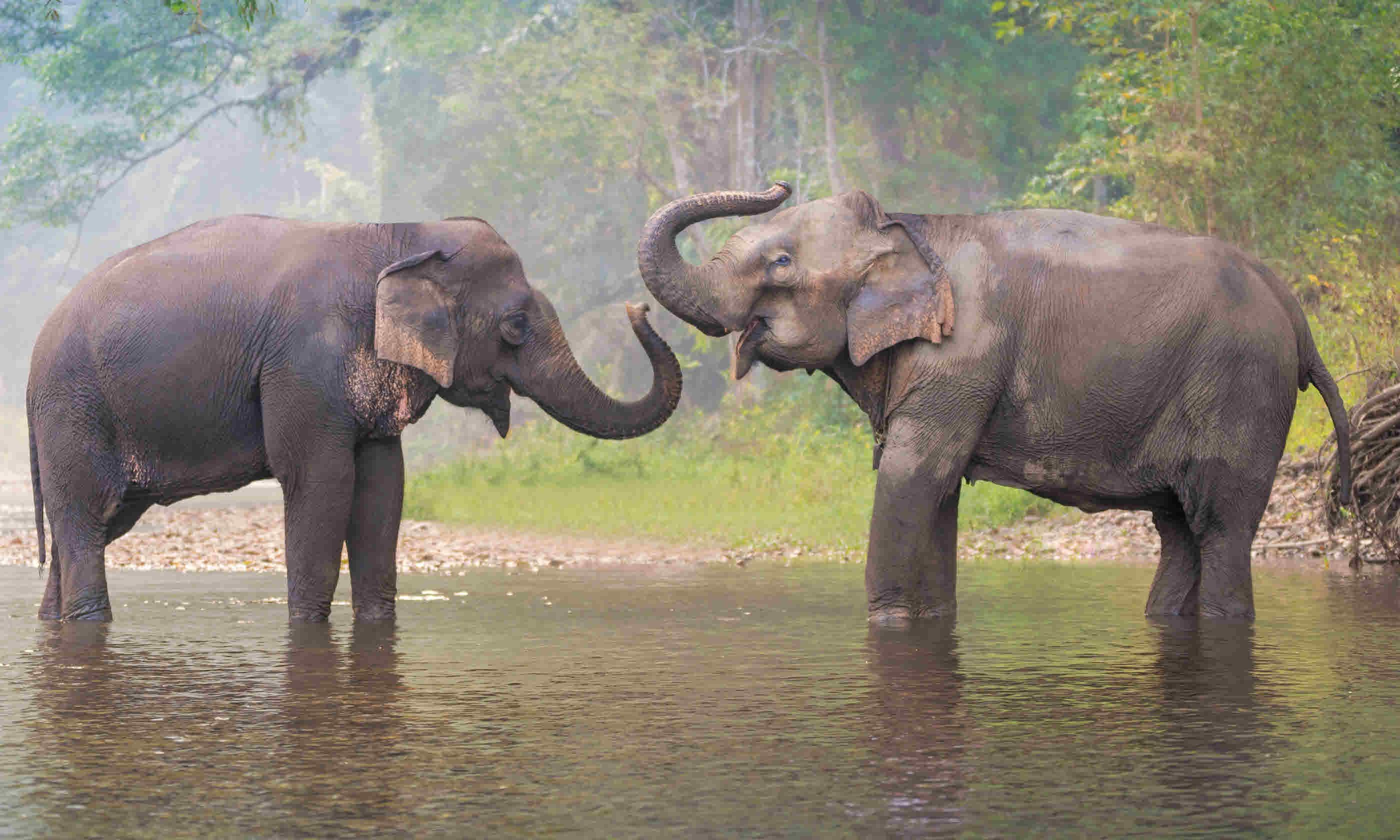 Asian Elephant in a natural river at deep forest, Thailand (Shutterstock)