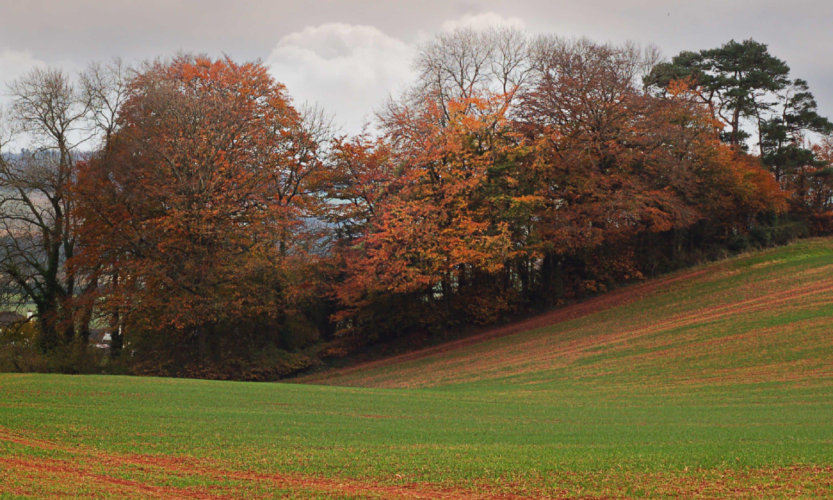 Autumn landscape in Somerset (Shutterstock)